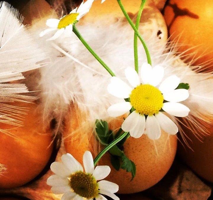 Ostern geht mit traumhaftem Wetter zu Ende. Wir …